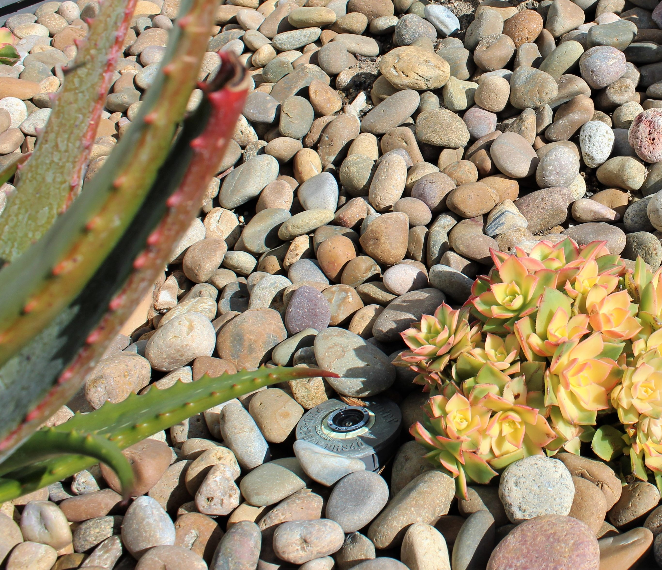 Buff Beach Pebble 1/2