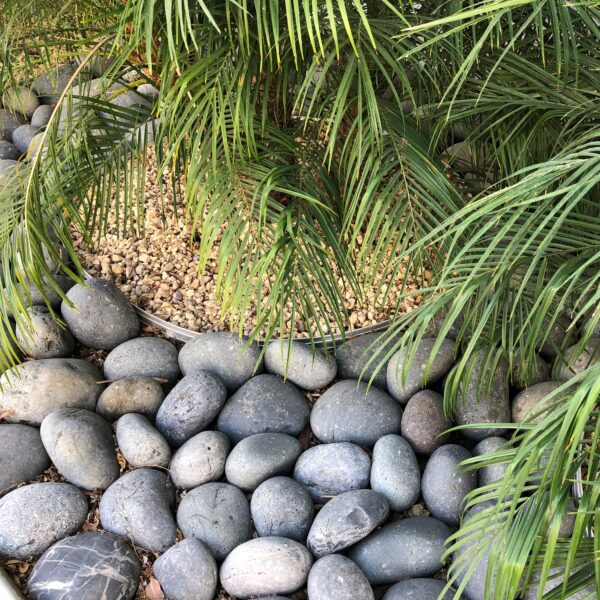 Black Pineapples 4 - Black Beach Pebble - Pineapple